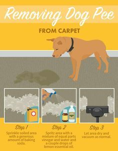 Removing Dog Pee from Carpet