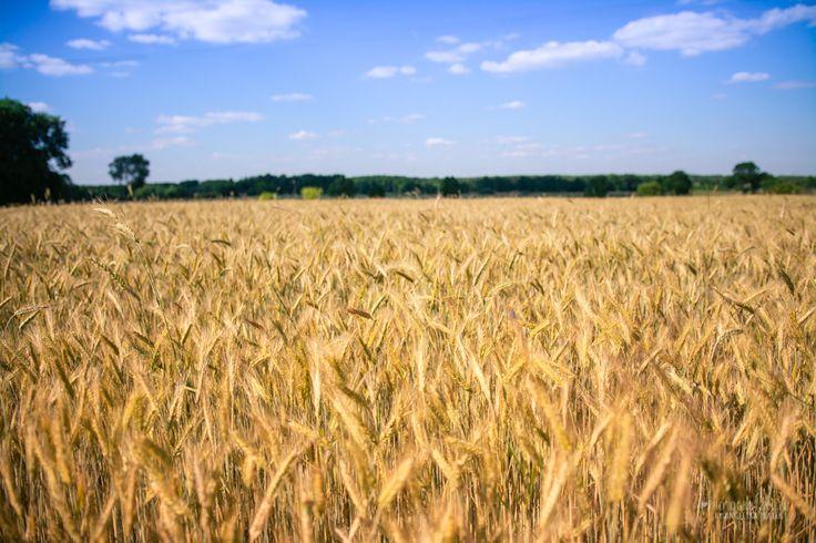 niebo i łąka