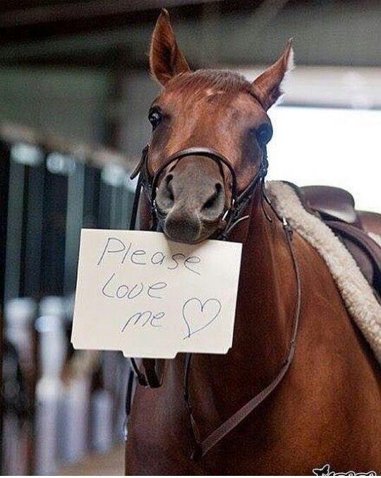 Смотреть картинки лошадей с надписями