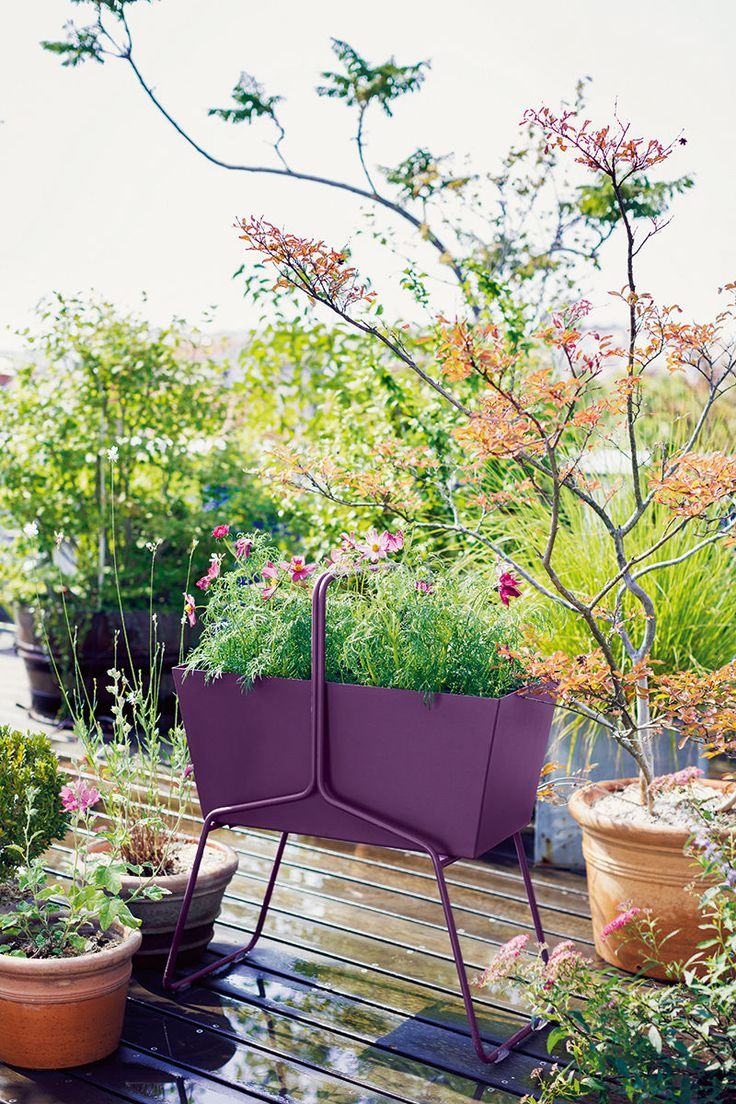 Les 25 meilleures id es de la cat gorie jardiniere haute for Plante verte haute exterieur