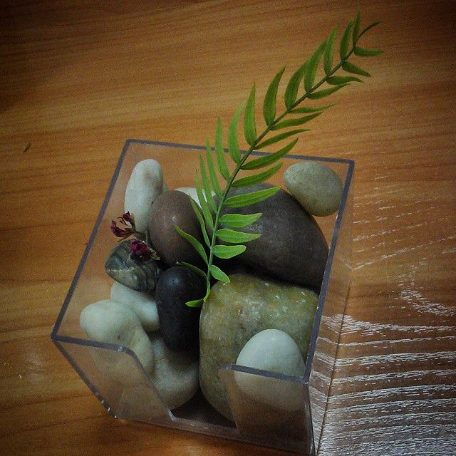 #green #moodlift #leaf #pebbles #sea #office #desk #admirenature #stopandsmelltheroses #awesome #beautiful #real #soft #gogreen #addcolor