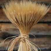 Large Dried Wheat Bunches (Bundles Wedding Centerpieces 1LB)