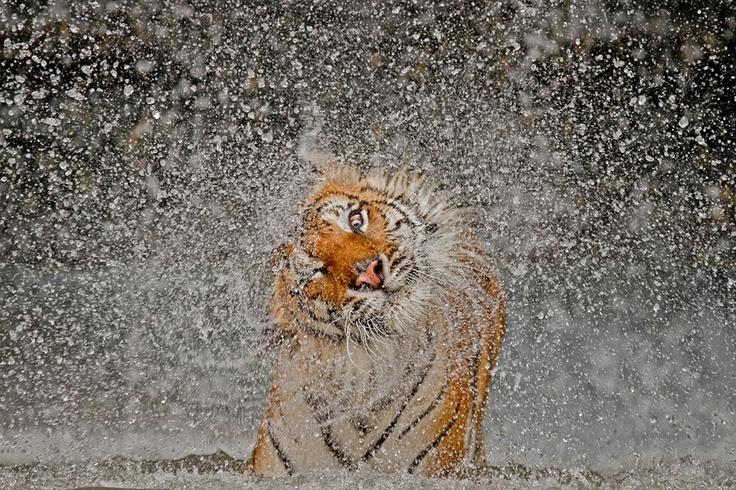 National Geographic Photo Contest - Khao Kheow, Chonburi, Thailand