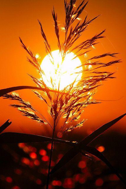 ♥ Sunset in Santorini island, Greece.  - Selected by www.oiamansion.com in Santorini.