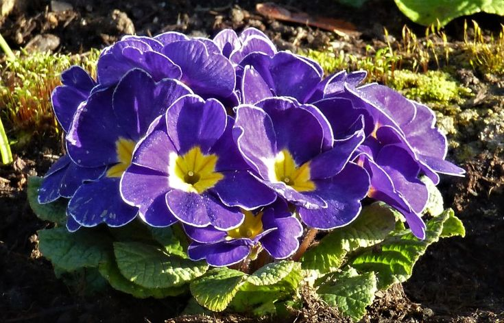 30 best Blumen images on Pinterest
