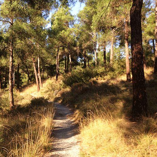 Hiking with trigiro in Greece #trigiro #tour #hike #forest #path #Thessaloniki #northGreece #Greece #travel