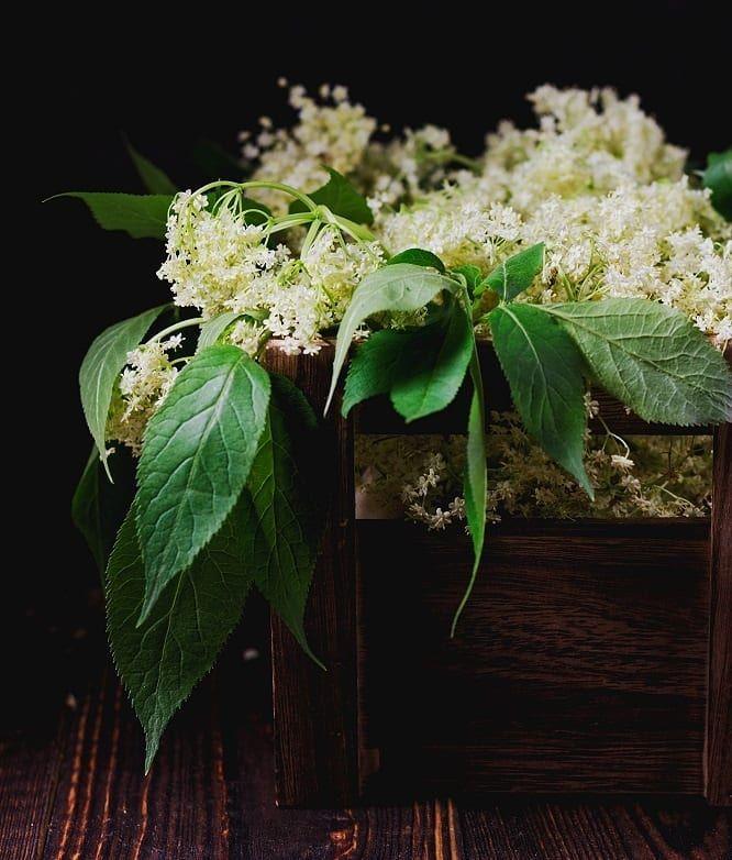 Kwiaty Czarnego Bzu Zdjecie I Przepis Na Syrop Z Tych Malych Zolto Bialych Kwiatuszkow Wstawilam Na Blogu W Maju Zeszleg Food Photography Plants Photography