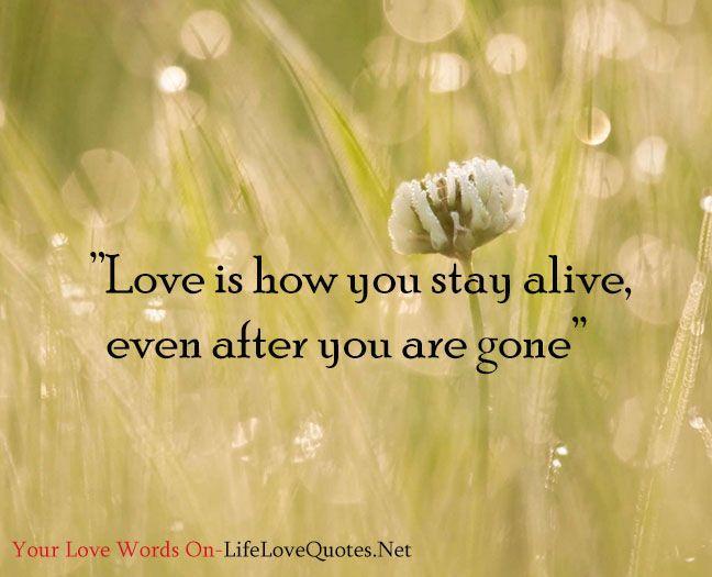 """""""Love is how you stay alive, even after you are gone."""" – Mitch Albom"""