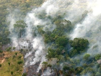 PERDIDA DE LA BIODIVERSIDAD EN ARGENTINA - En este caso estamos perdiendo la Biodiversidad con un Incendio forestal en Argentina