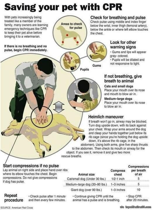 Important info for your dog via topoftheline99.com
