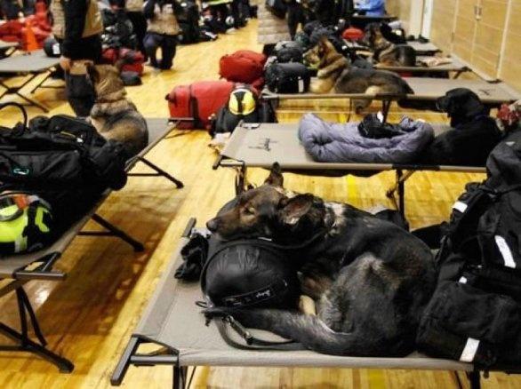 Cani da ricerca e da macerie, eroi a quattro zampe a lavoro in Emilia dopo il terremoto