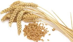 People with non-celiac wheat sensitivity experience symptoms when ingesting gluten, but do not test positive for celiac disease.