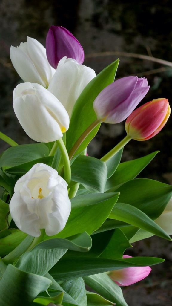 Tulips.  Flowers Make My Day.  For similar pins please follow me at - https://www.pinterest.com/annelouise1959/flowers-make-my-day/