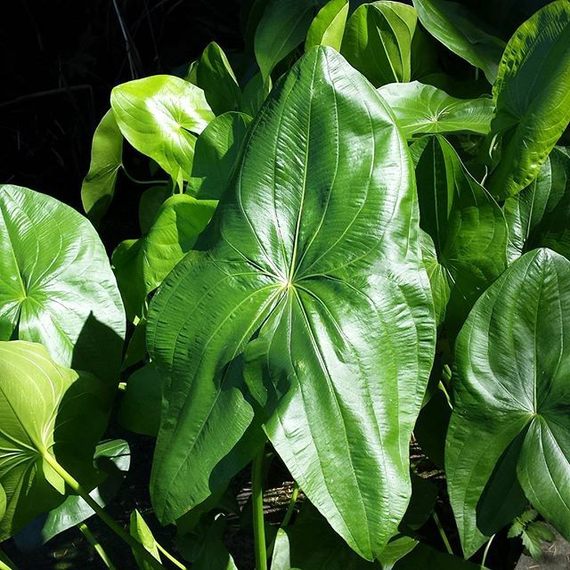 Green | # #Referencephotoshootday #botanicalgarden #plants #leafs #greencolor #nature #Wanderlust #artreference #artist #artistlife #BotanischerGarten #식물원 #공장 #자연 #잎 #looonalou #nofilter #symbiosisseries #