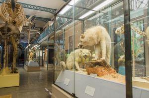 Natuurhistorisch museum Lille