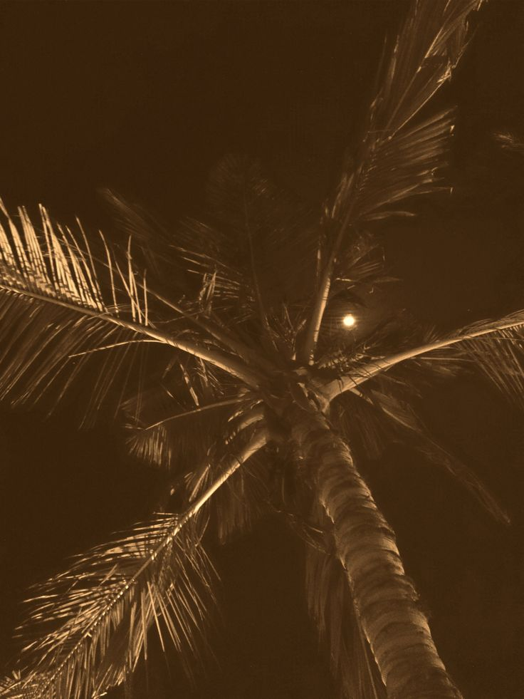 palm tree and moon by Mel Graham on 500px