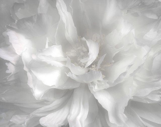 258 besten White Bilder auf Pinterest   Deko ideen, Einfach und ...