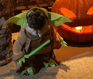 Sparkie, I know your parents hate Star Wars, but that doesn't mean you have to... Dog Yoda, wise you are.