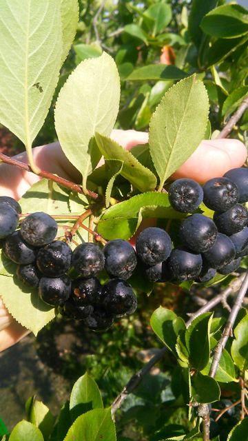 Bylinkové likéry a vína | Bylinky pro radost - Part 3