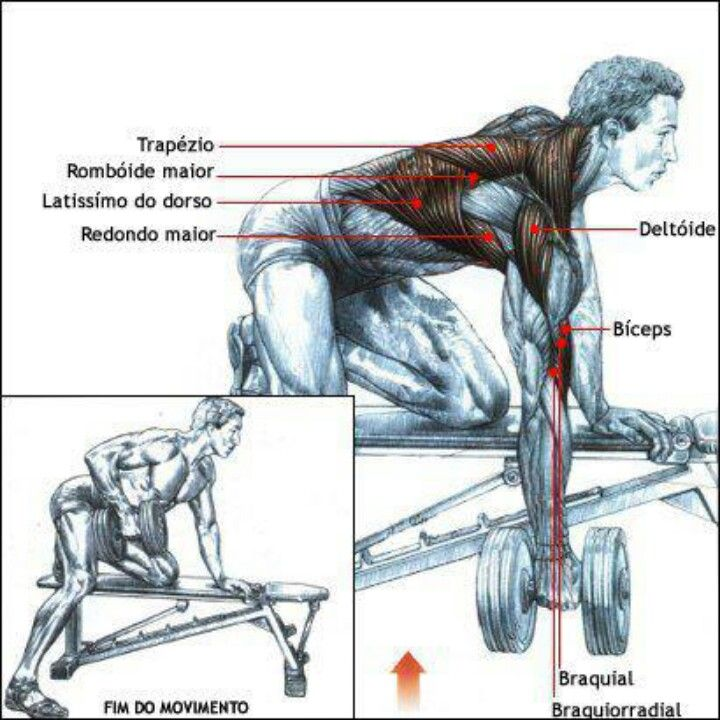 bent over dumbell row  http://burnfatandbuildmusclediets.com