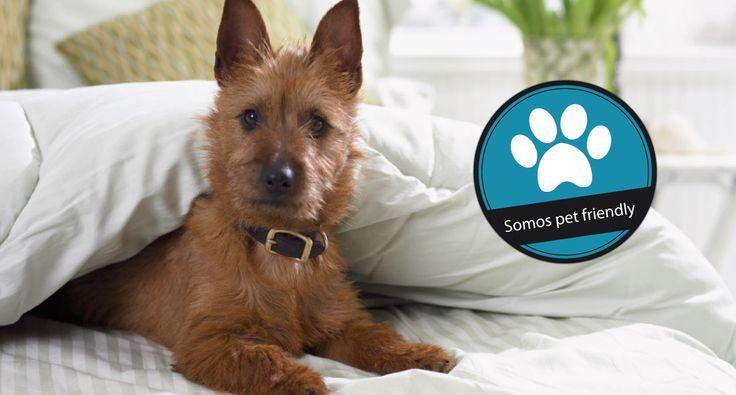 #PetFriendly Nos complace dar la bienvenida con gusto a sus mascotas, por favor póngase en contacto con nosotros previamente para que podamos prepararte nuestra mejor bienvenida!  #ChatOnline ::www.hotelcc.com.ar::