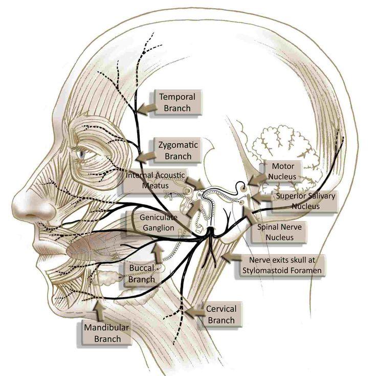 management of facial nerve