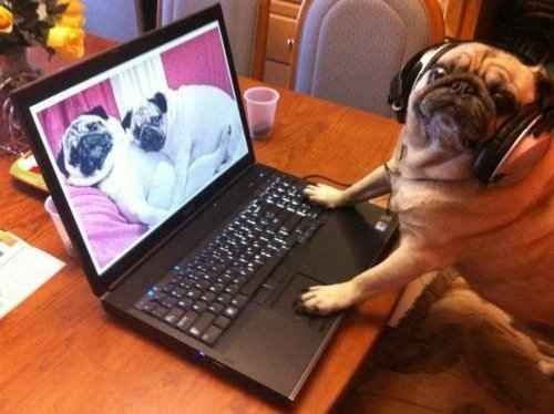 Proof That Pugs Make Literally Everything 100 Times Better
