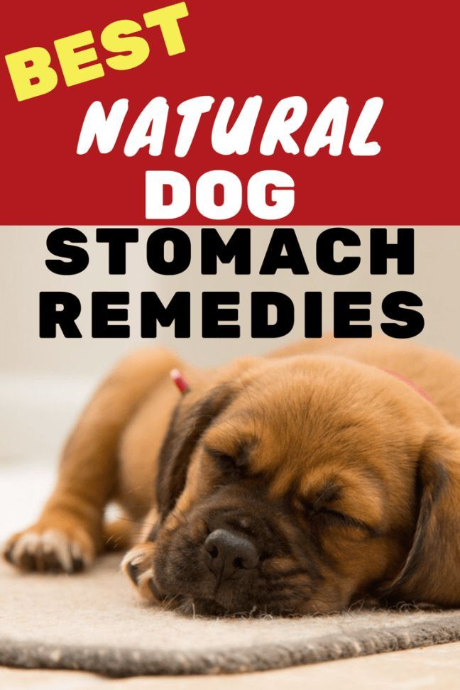 Best dog stomach remedies diarrhea