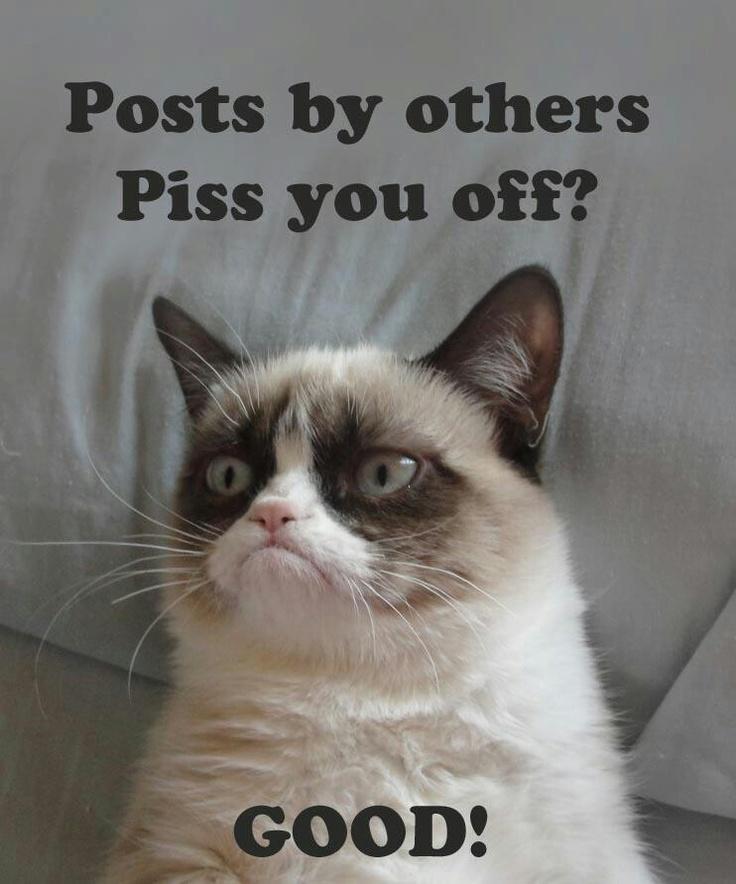 246 best images about grumpy cat on pinterest