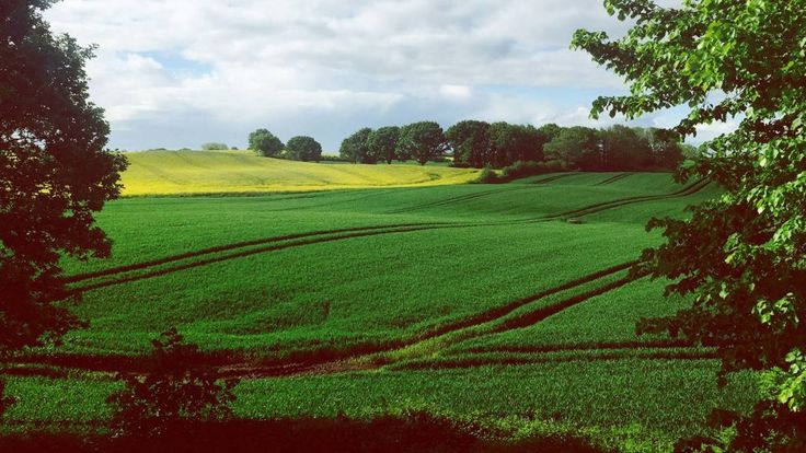 L'UE sostiene un'agricoltura che rischia di danneggiare la salute delle persone, il nostro cibo e l'ambiente. Firma la consultazione e cambiamo agricoltura!