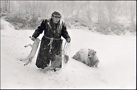 (And often either cold or hot)  James Ravilious_ Ivor Brock rescuing a lamb in a blizzard, Milhams, Dolton, Devon 1978