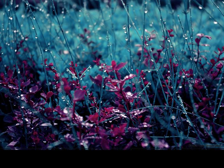 Wallpaper Love Rain Hd : 17 Best images about After The Rain on Pinterest Scenery ...