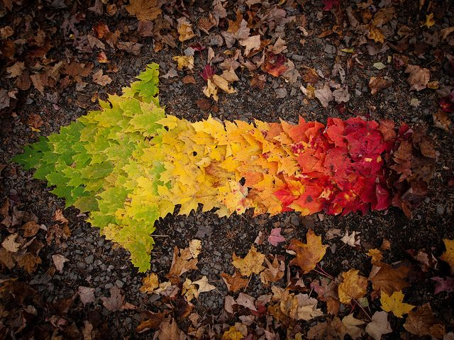 photo humour insolite feuille automne flèche