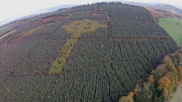 A massive Celtic cross has been secretly growing in an Irish forest | Dangerous Minds
