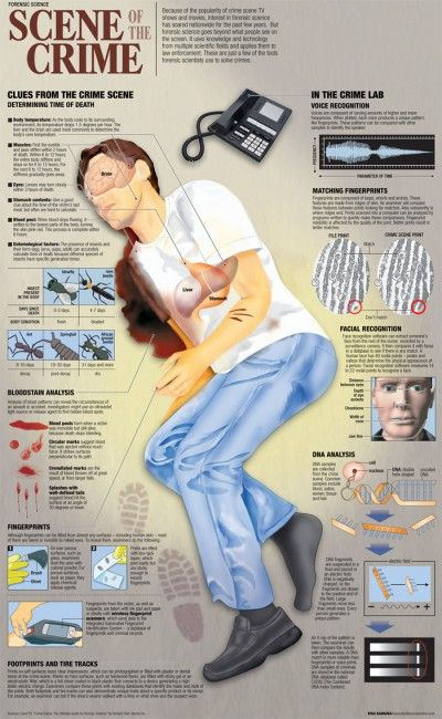 Forensic science at the crime scene infographic (Los Angeles web design)