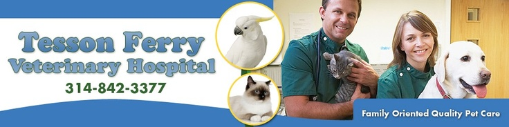 Image result for tesson veterinary hospital