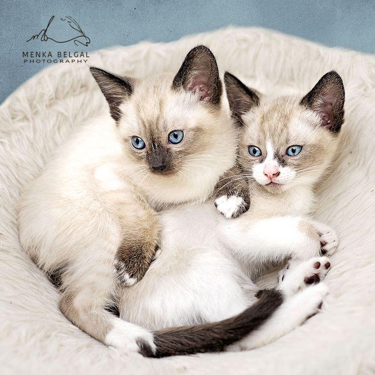 Los Alamos Animal Shelter Cats