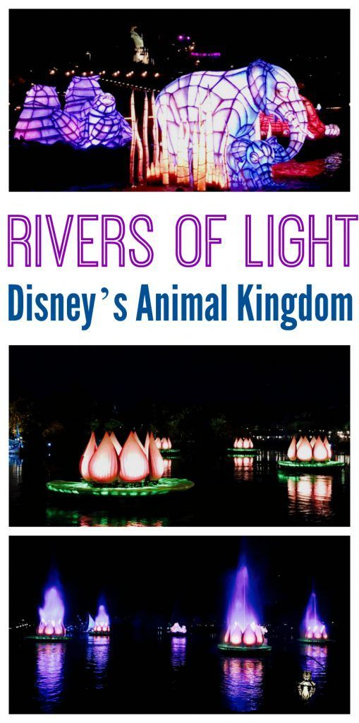 Rivers of Light at Disney Animal Kingdom - Rivers of Light is one of those attractions that carries you into a purely magical place from the first sight and sound, and it keeps you there, firmly held in its pixie dust grasp until the very end. https://www.southernfamilyfun.com/rivers-of-light-disney-animal-kingdom/ via @winonarogers