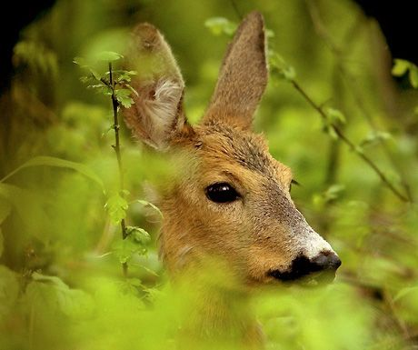 Photograph of the week: Young deer in the wilds of Tuscany http://www.aluxurytravelblog.com/2013/04/17/photograph-of-the-week-young-deer-in-the-wilds-of-tuscany/