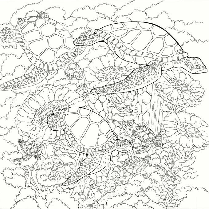 Legendary Worlds Adult Colouring Book Turtles By Anonymous