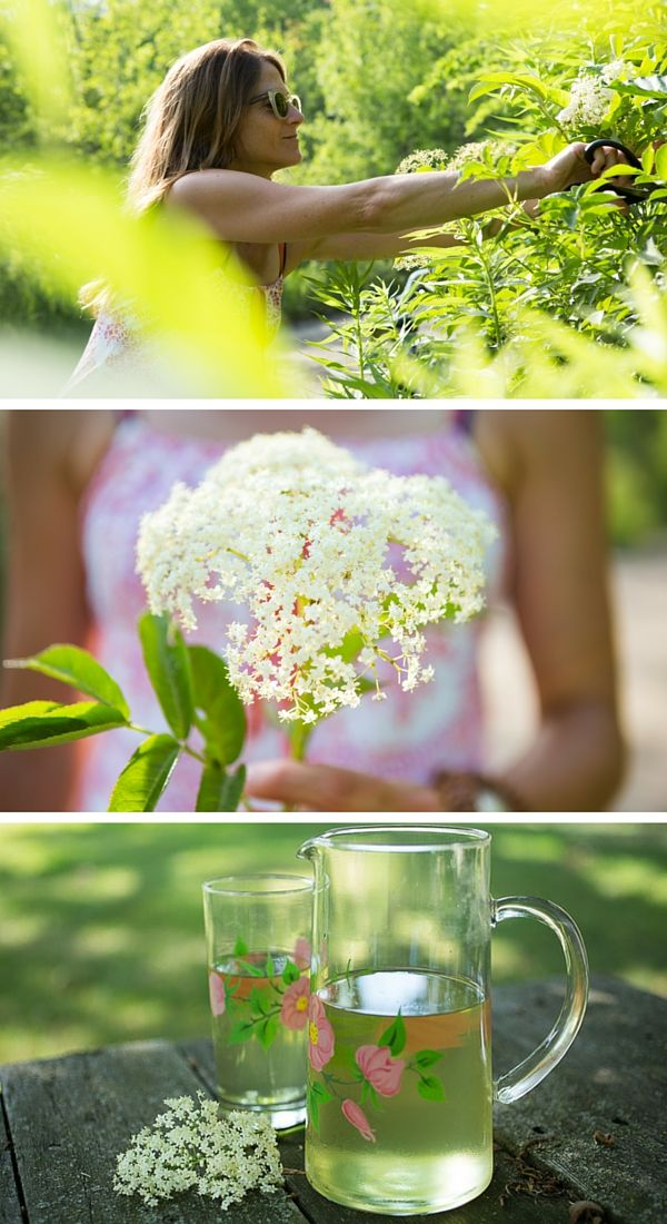 Have fun foraging for elder flowers and bottle them up by making a cordial or simple syrup with lemons. Add this refreshing summer ingredient to sparkling water or wine, fritters and other treats or make a fabulous elder flower gin. How to harvest, recipes and more.
