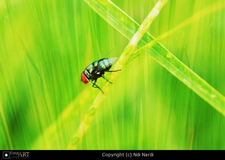 Bug3 by Ndi Nardi   FINEART-PORTUGAL