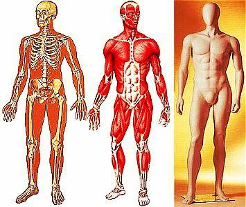 Organizzazione-del-Corpo-Umano