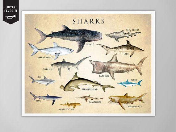 26 best shark bedroom images on pinterest shark bedroom for Shark tank fairy door