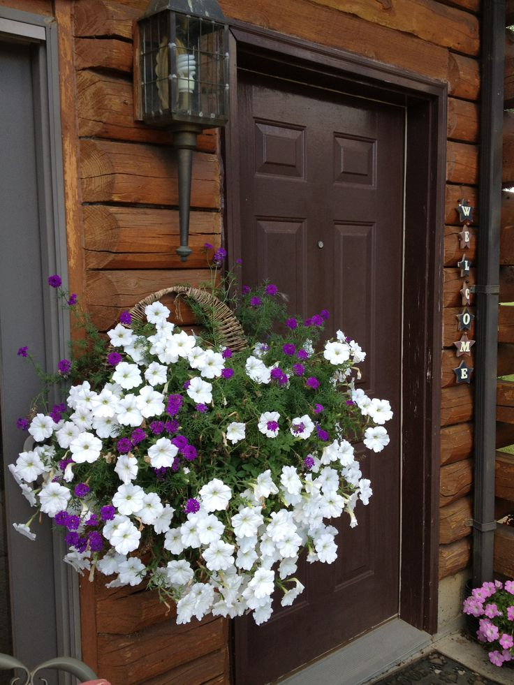 530 Best Flowers Images On Pinterest Container Flowers