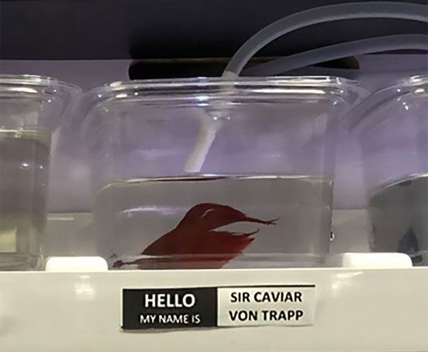 25 Pet Store Gives Celebrity Names To Their Fishes And They Are