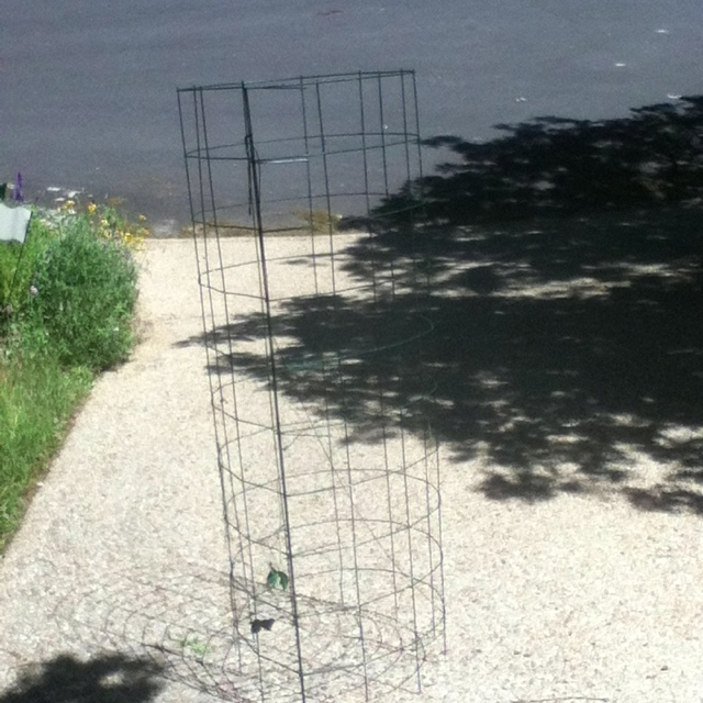 Tomato cage built from concrete reinforcing panel and painted green. Much sturdier than those cages from the big box stores.: Tomatoes Peppers Potatoes, Concrete Reinforcing, Tomato Cages, Box Stores, Cage Built, Garden Tomatoes, Reinforcing Panel
