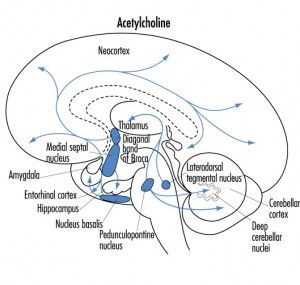 Alzheimers Disease Is The Fastest Growing Health Threat To