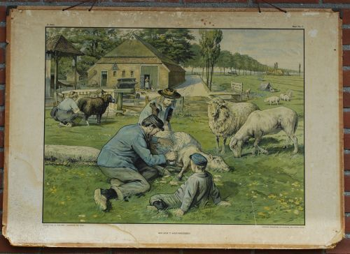 sheep shearing (Cornelis Jetses)