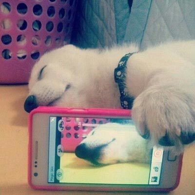 My dog selfi...